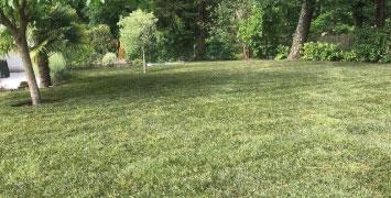 Pose de rouleaux de gazon dans votre jardin