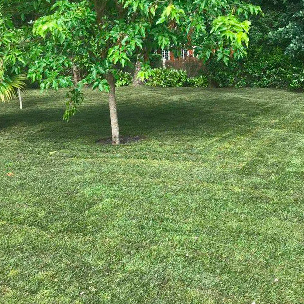 Photo d'un jardin après la pose de plaques de gazon
